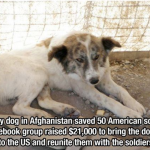 A stray dog in afghanistan saved 50 American soliders